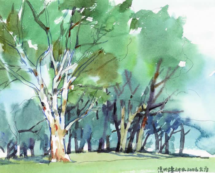 澳洲桉树林 20 24 2006年