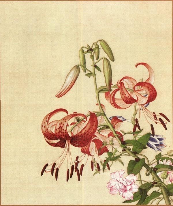 11.百合花与缠枝牡丹